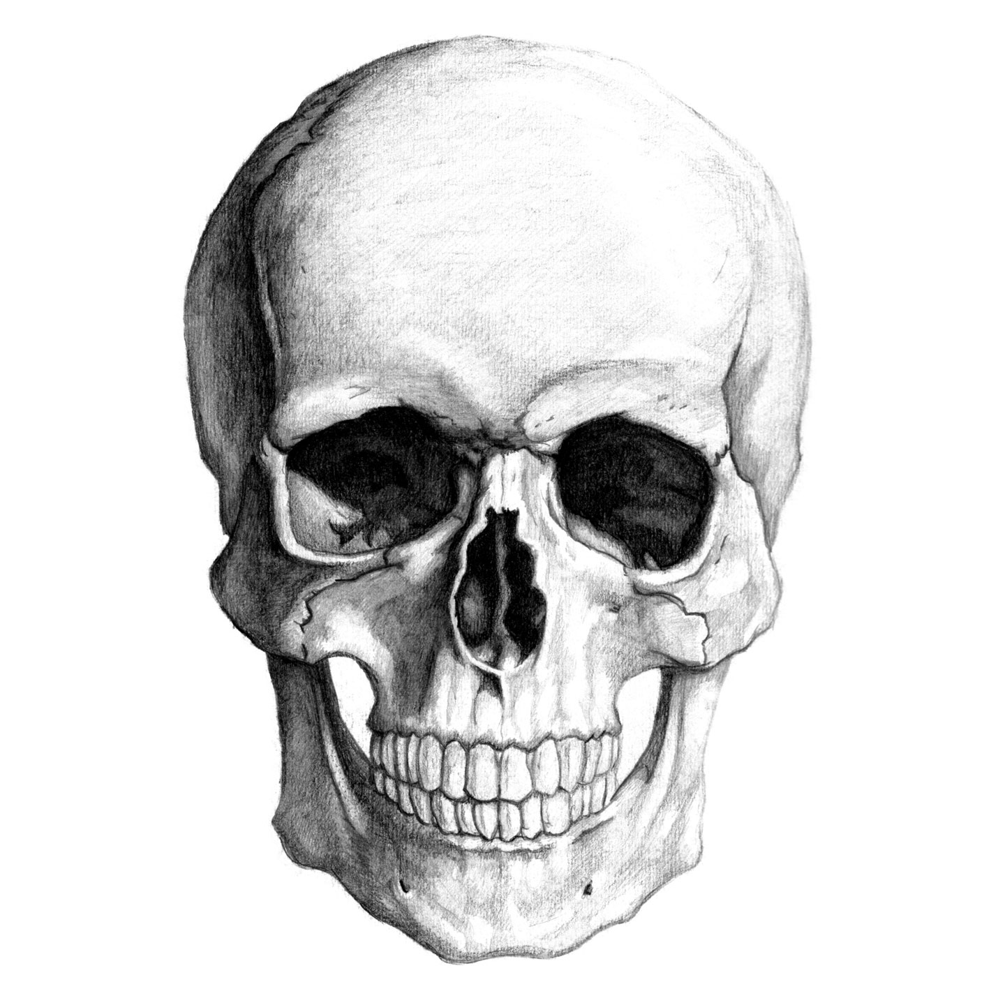 Kernie Cam Productions: Gallery: Skull Pencil Drawing: www.kerniecamproductions.com/gallery.php?pg=project&sub...